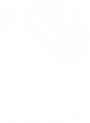 Coral – A Sushi Concept